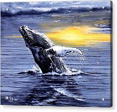 Humpback Whale Breaching Acrylic Print by Bob Patterson