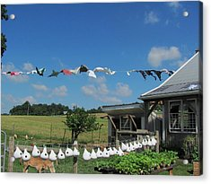 Hung Out To Dry Acrylic Print by Renee Holder