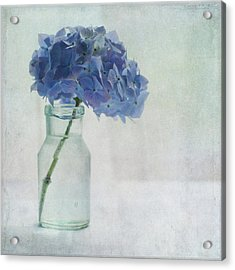 Hydrangea Acrylic Print by Jill Ferry