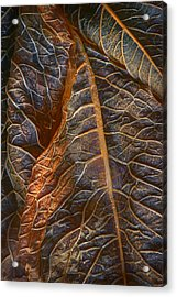 Hydrangea Leaves - Right Acrylic Print by Nikolyn McDonald