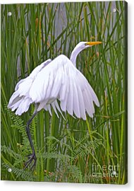I Am Out Of Here Acrylic Print by Carol  Bradley