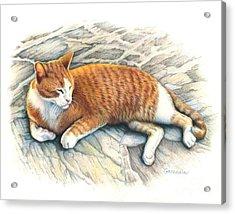 I Am Tiger Acrylic Print by Catherine Garneau