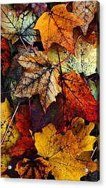 I Love Fall 2 Acrylic Print by Joanne Coyle