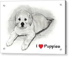 I Love Puppies Golden Retriever Acrylic Print by Joyce Geleynse