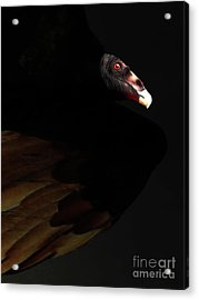 I Saw The Vulture In My Dreams Again Acrylic Print by Wingsdomain Art and Photography