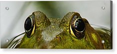 I See You Acrylic Print by Michael Peychich