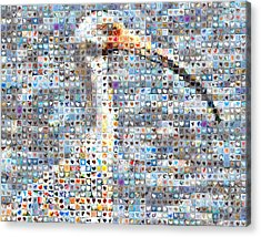 Ibis Acrylic Print by Boy Sees Hearts