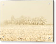Icy Cold Foggy Woodland Acrylic Print by Jorgo Photography - Wall Art Gallery