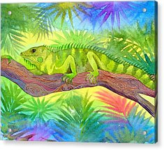 Iguana Acrylic Print by Jennifer Baird
