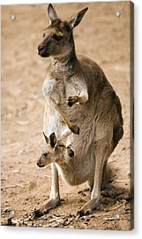 In  Mother's Care Acrylic Print by Mike  Dawson