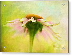 In Perfect Harmony Acrylic Print by Lois Bryan