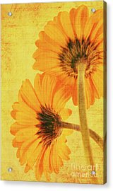 In Summertime Acrylic Print by Angela Doelling AD DESIGN Photo and PhotoArt