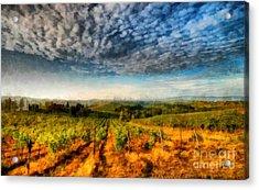In The Vineyard Winery Landscape Acrylic Print by Edward Fielding