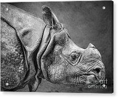 Indian Rhino Profile Acrylic Print by Jamie Pham