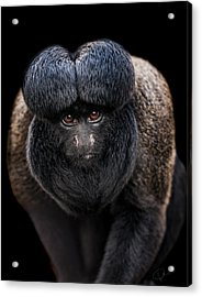Inquisitive  Acrylic Print by Paul Neville