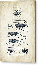 Insects - 1792 - 03 Acrylic Print by Aged Pixel