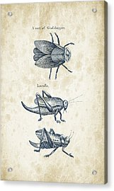Insects - 1792 - 08 Acrylic Print by Aged Pixel