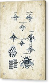 Insects - 1792 - 14 Acrylic Print by Aged Pixel