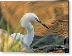 Intent Hunter Acrylic Print by Kate Brown