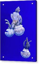 Into The Blue Acrylic Print by Wim Lanclus