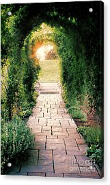 Into The Light Acrylic Print by Scott Nelson
