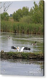 Into The Water Acrylic Print by Alyce Taylor