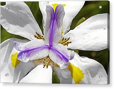 Iris An Explosion Of Friendly Colors Acrylic Print by Christine Till
