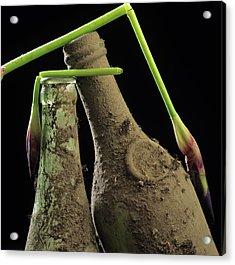 Iris And Old Bottles Acrylic Print by Bernard Jaubert