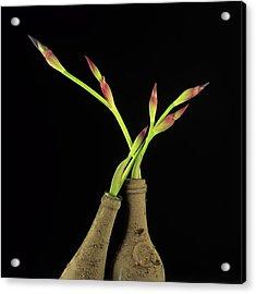 Iris Acrylic Print by Bernard Jaubert