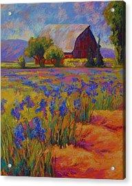 Iris Field Acrylic Print by Marion Rose