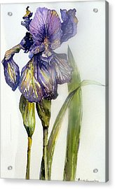 Iris In Bloom Acrylic Print by Mindy Newman