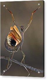 Iris Oratoria Acrylic Print by Hasan Baglar