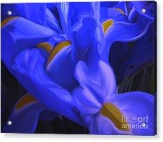 Iris Sparkle Acrylic Print by Roxy Riou