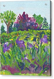 Irises At The Rose Garden Acrylic Print by Paul Thompson