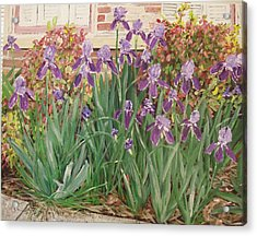 Irises Fort Smith Art Center Acrylic Print by Sharon  De Vore