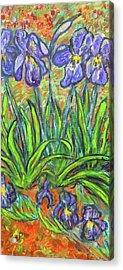 Irises In A Sunny Garden Acrylic Print by Carolyn Donnell