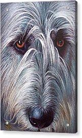 Irish Wolfhound Acrylic Print by Elena Kolotusha