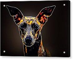 Italian Greyhound Acrylic Print by Alexey Bazhan
