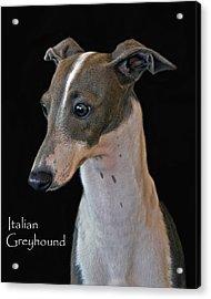 Italian Greyhound Acrylic Print by Larry Linton