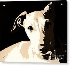 Italian Greyhound Poster Acrylic Print by Angela Rath