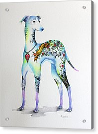 Italian Greyhound Tattoo Dog Acrylic Print by Patricia Lintner