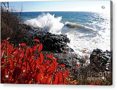 It's November Acrylic Print by Sandra Updyke