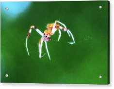 Itsy Bitsy Spider Acrylic Print by Bill Cannon