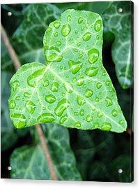 Ivy Leaf Acrylic Print by Michael Peychich