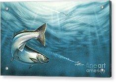 J-pluggin Salmon Acrylic Print by JQ Licensing