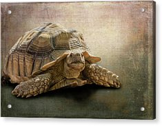 Jamal The Tortoise Acrylic Print by Angela A Stanton