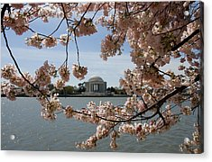 Jefferson Memorial Framed By Cherry Blossoms Acrylic Print by Brendan Reals