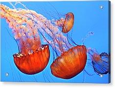 Jelly Fish Acrylic Print by Jill Buschlen