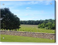 New Jersey Harvest Acrylic Print by Brian Manfra
