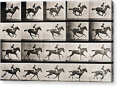 Jockey On A Galloping Horse Acrylic Print by Eadweard Muybridge